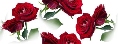 3e1315179 Керамическая плитка Cerrol Imperia Rosarium 2 Listwa бордюр 6 5x50 купить в  Элисте
