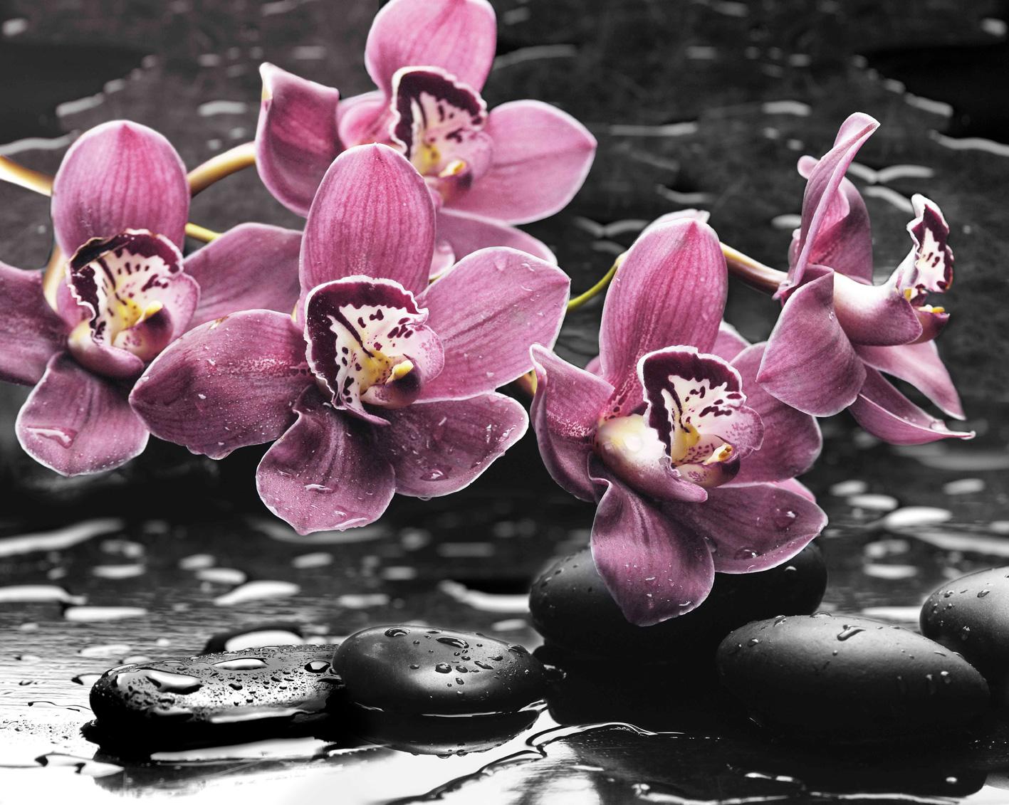 Орхидея картинки красивые, открытки