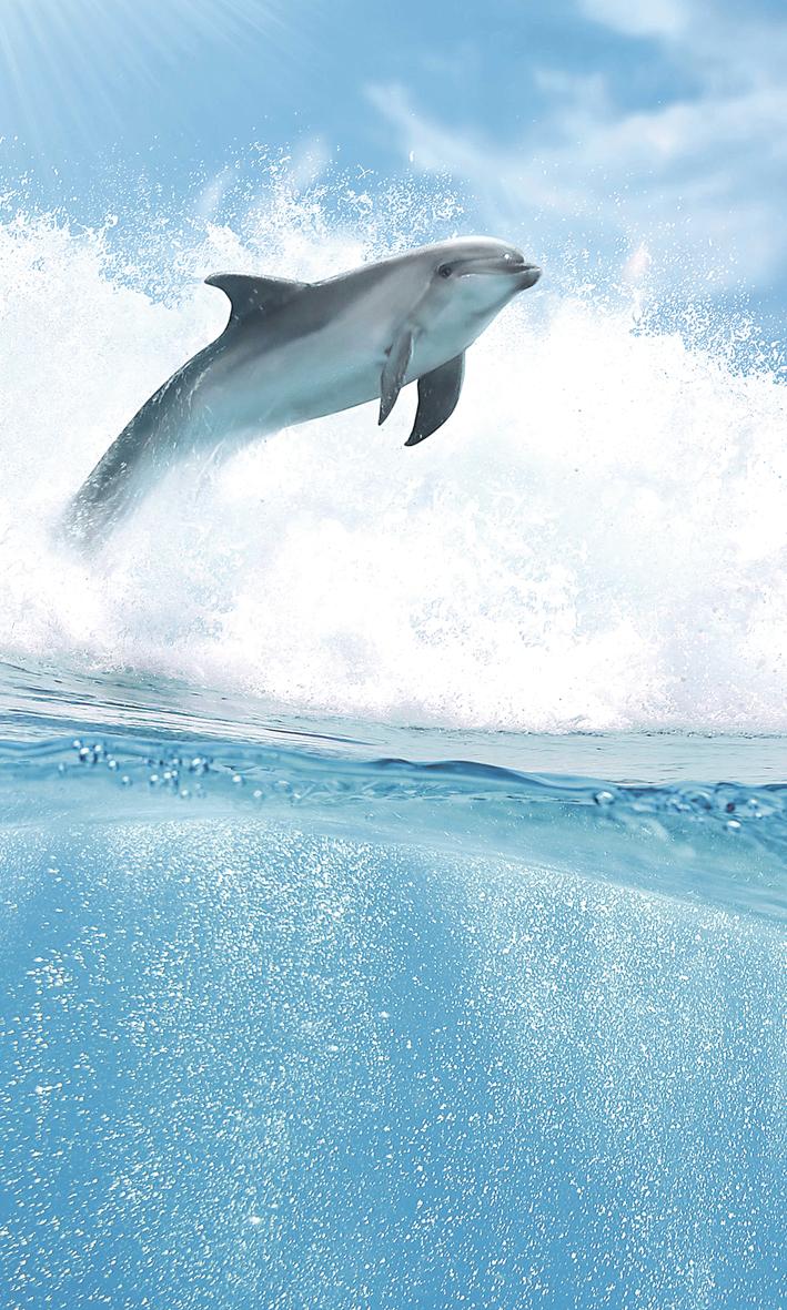 Купить Керамическая плитка Cerrol Porto Dolphins B Панно 100x60 (4пл), Польша