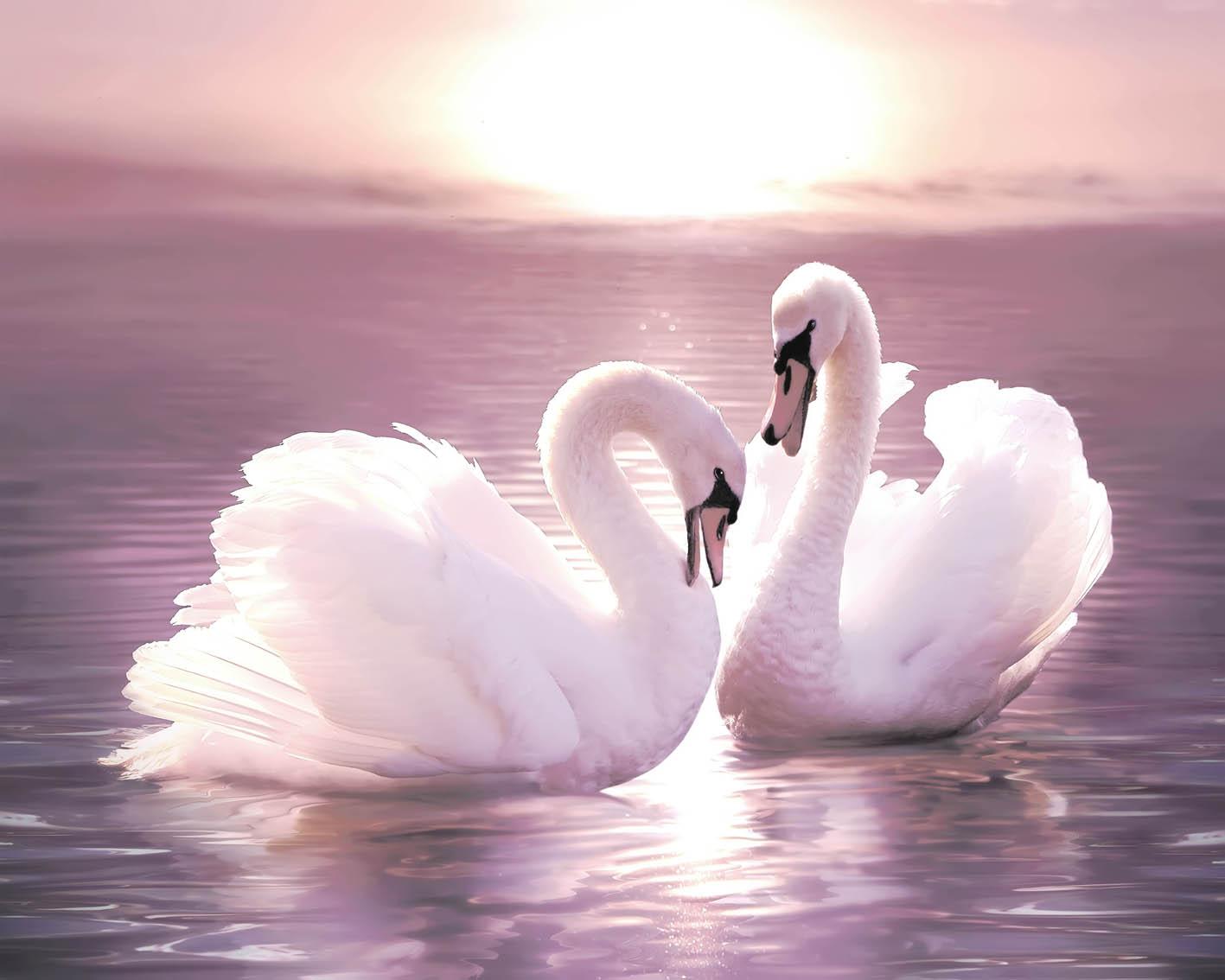 С днем свадьбы открытки с лебедями