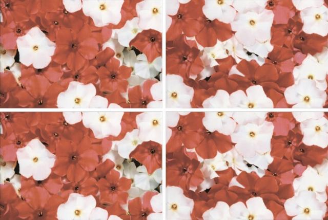 Купить Керамическая плитка Нзкм (Terracotta) Alba Daisy 4 элемент. панно 40x60, Россия